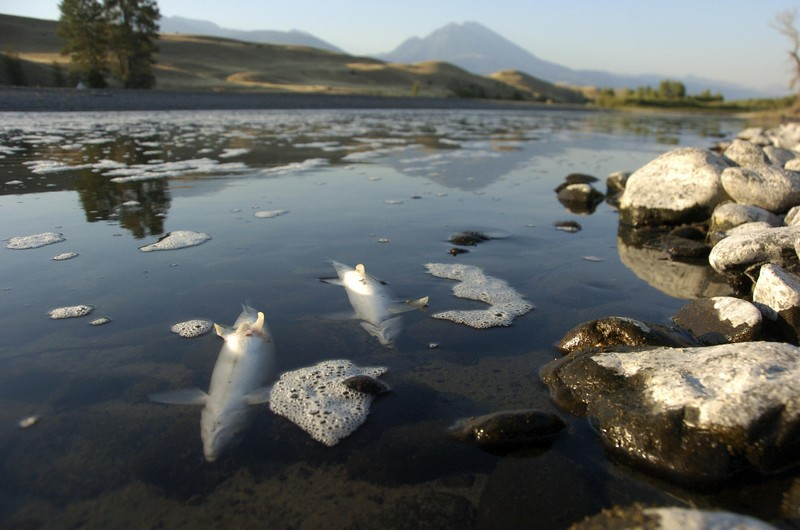 Wanderlust Tips Magazine   Yellowstone River's stretch closed due to fish death