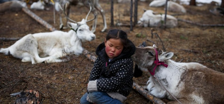 Tsaatan community: The last reindeer herders in Mongolia
