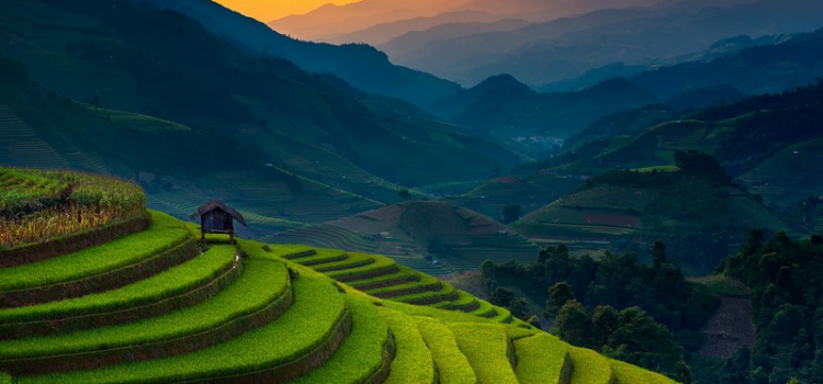Golden waves on the terraces in Mu Cang Chai
