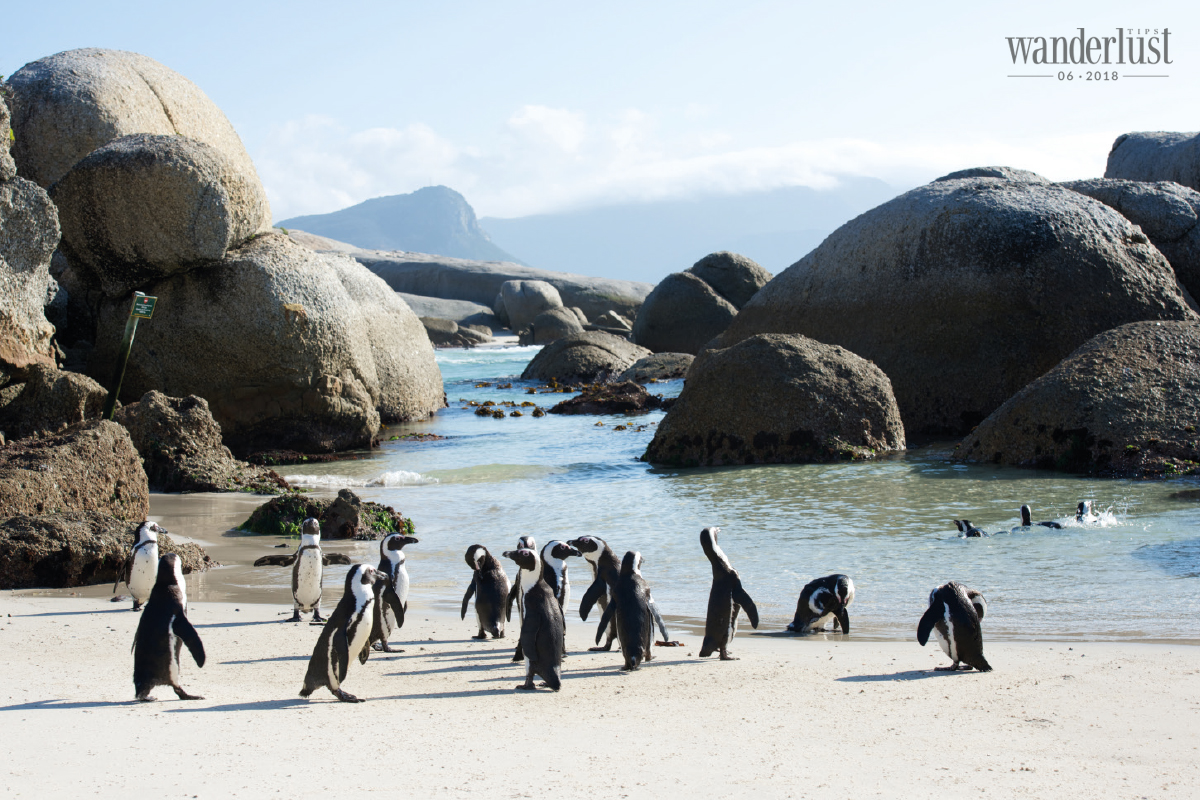 Wanderlust Tips Magazine | Cape Town – The rendezvous of the oceans