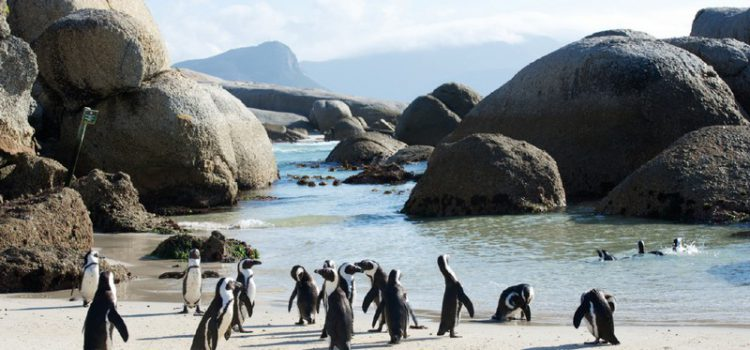 Cape Town: The rendezvous of the oceans