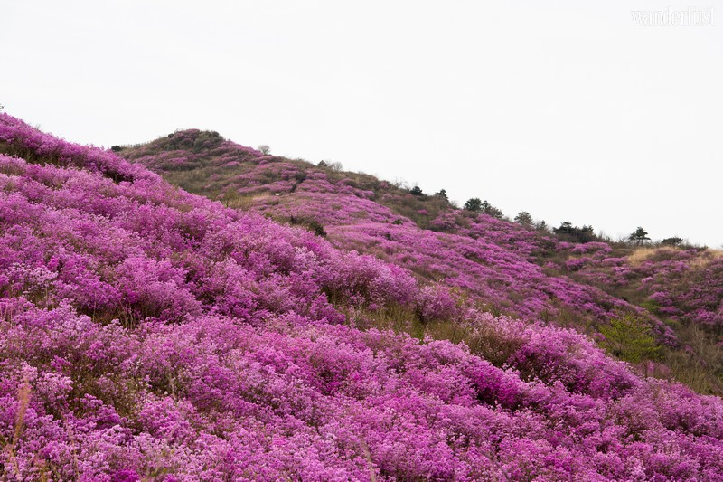 Wanderlust Tips | April: An exquisite floral interlude