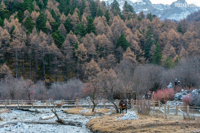 Wanderlust Tips   Looking for the last Shangri-La in Daocheng Yading, China
